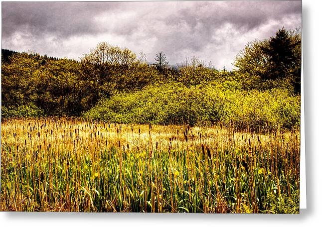 Field. Cloud Greeting Cards - Field of Cattails Greeting Card by David Patterson