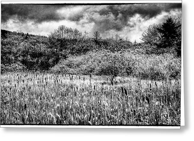 Field. Cloud Greeting Cards - Field of Cattails II Greeting Card by David Patterson