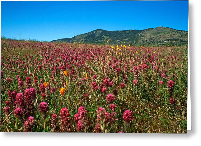 Landscape Framed Prints Greeting Cards - Field of Clover Greeting Card by Kathy Yates