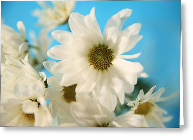 White Pyrography Greeting Cards - Field of Daisies Greeting Card by Mary Broughton