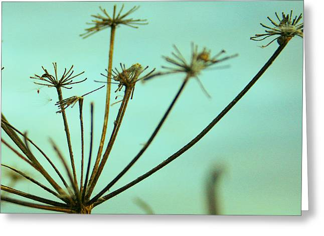 Stalks Of Grass Greeting Cards - Field of Dreams Greeting Card by Nomad Art And  Design