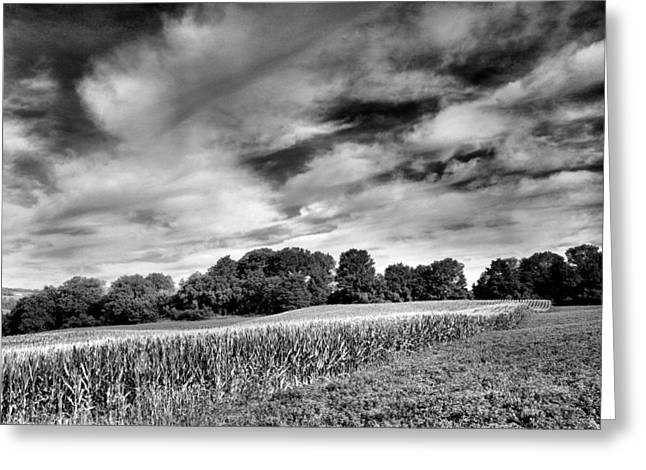 Pasture Framed Prints Greeting Cards - Field of Dreams III Greeting Card by Steven Ainsworth