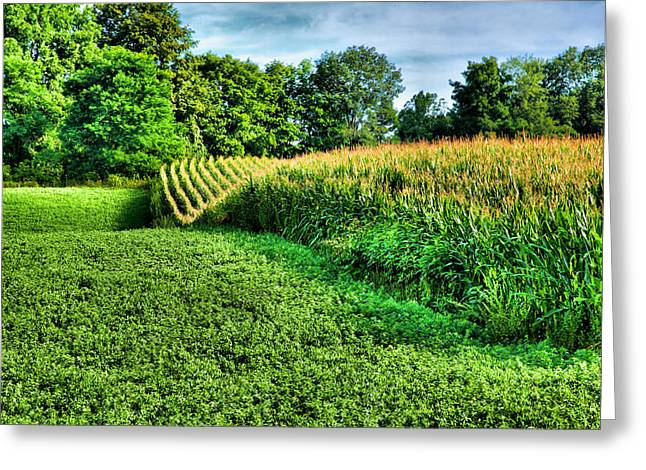 Cornfields Greeting Cards - Field of Dreams IV Greeting Card by Steven Ainsworth
