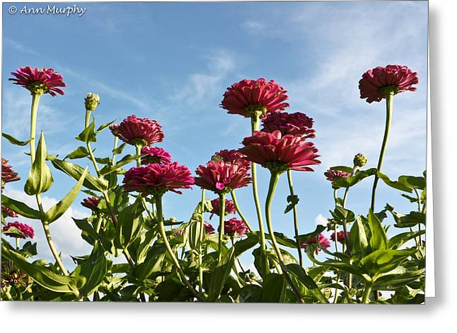 From Seed Greeting Cards - Field of Flowers Greeting Card by Ann  Murphy