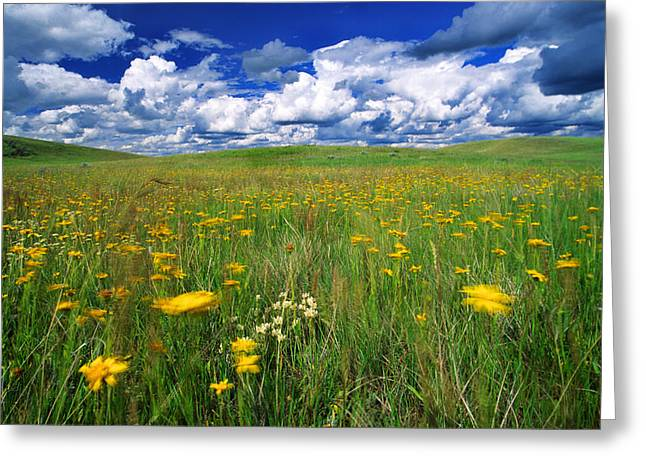 Peaceful Scenery Greeting Cards - Field Of Flowers, Grasslands National Greeting Card by Robert Postma