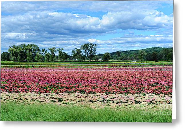 Deerfield Greeting Cards - Field Of Flowers Greeting Card by HD Connelly