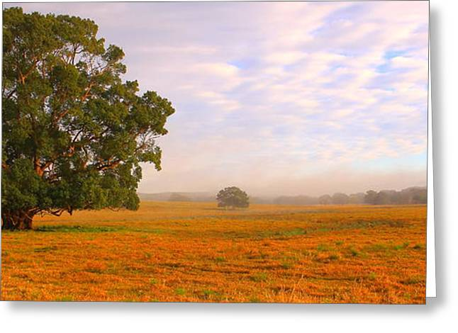 field of gold Greeting Card by Paul Riemer