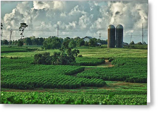 Watermelon Digital Art Greeting Cards - Field of Green Greeting Card by Michael Thomas