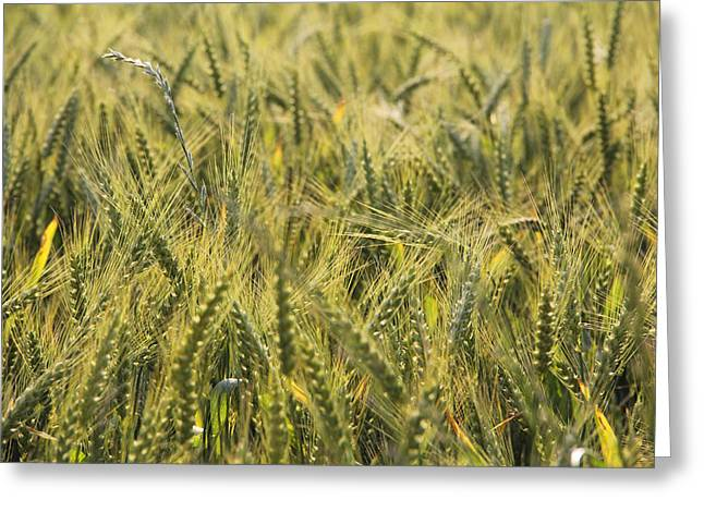 Field Greeting Cards - Field of Green Greeting Card by Mike McGlothlen
