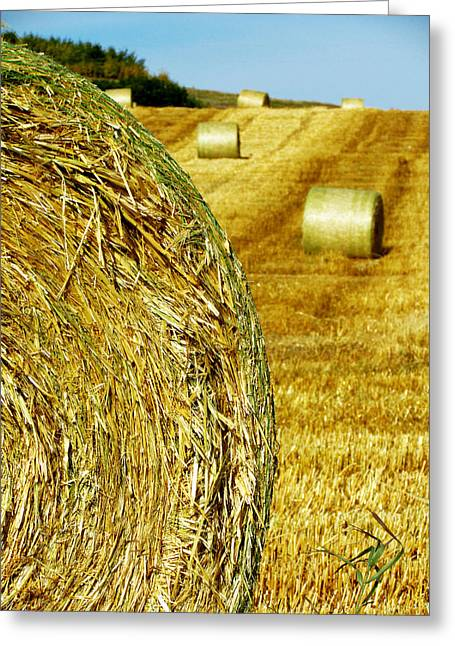 Hay Bales Greeting Cards - Field of Hay Greeting Card by Andrea Arnold