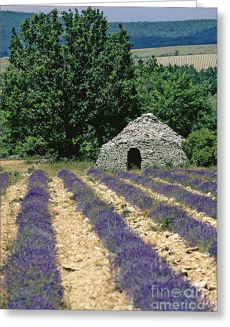 Sheds Greeting Cards - Field of lavender. Sault Greeting Card by Bernard Jaubert