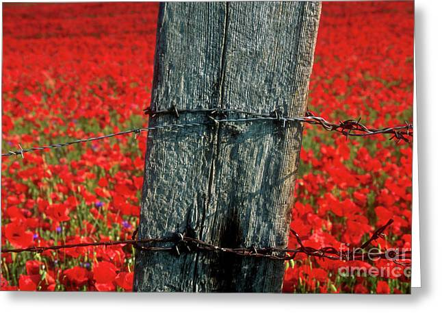 Enclosed Greeting Cards - Field of poppies with a wooden post. Greeting Card by Bernard Jaubert