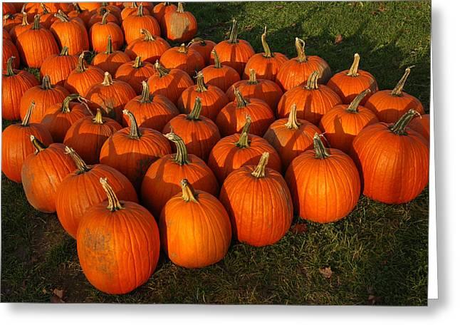 Carved Leaves And Flowers Greeting Cards - Field of Pumpkins Greeting Card by LeeAnn McLaneGoetz McLaneGoetzStudioLLCcom