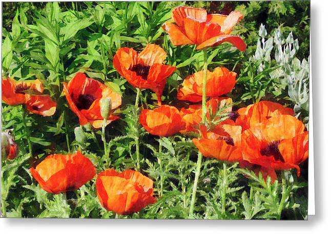 Field Of Red Poppies Greeting Card by Susan Savad