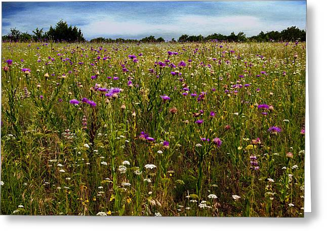 Tamyra Ayles Greeting Cards - Field of Thistles Greeting Card by Tamyra Ayles