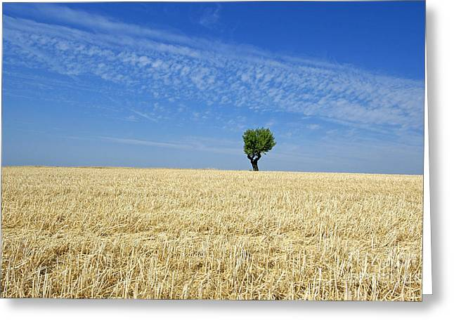 Field of wheat in Provence Greeting Card by BERNARD JAUBERT