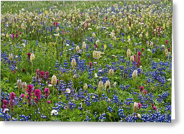 Mazama Greeting Cards - Field of Wildflowers Greeting Card by Greg Vaughn - Printscapes