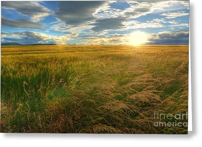 Breezy Digital Greeting Cards - Fields of Gold Greeting Card by John Kelly