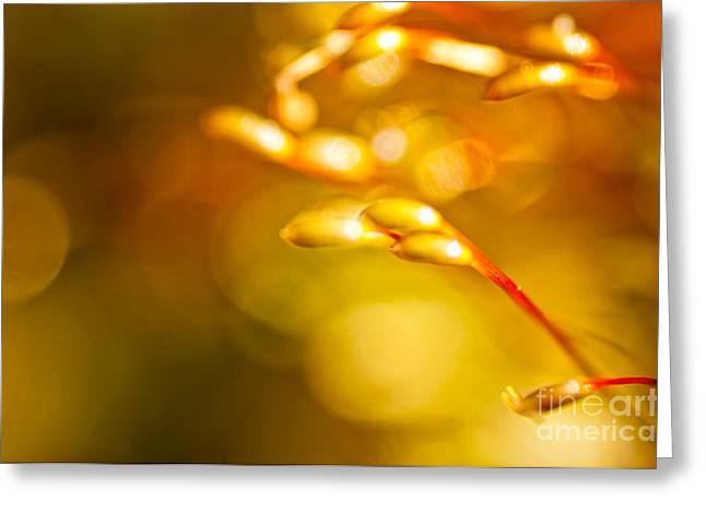 Large Poster Greeting Cards - Fields of Gold Greeting Card by Venura Herath
