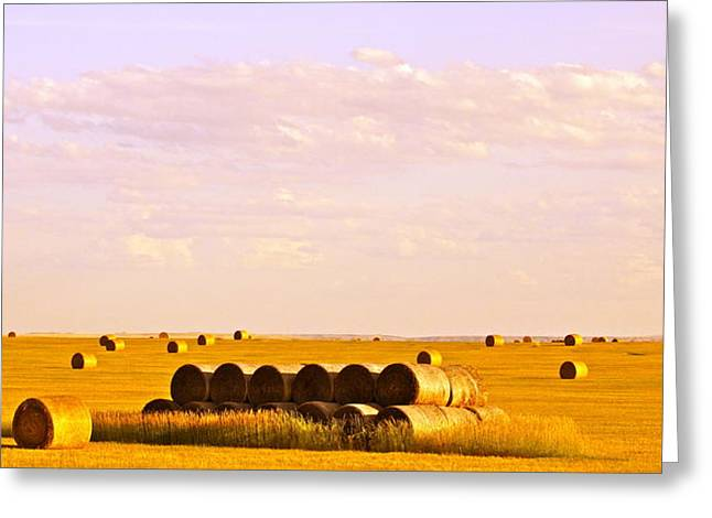 Hay Bales Greeting Cards - Fields of Plenty Greeting Card by Kate Purdy