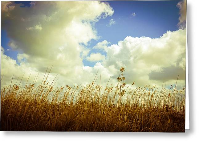 Fields Of Summer Greeting Card by Ruth MacLeod