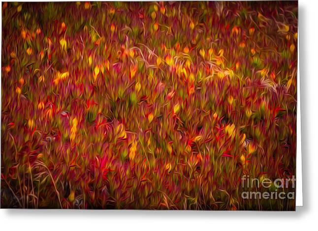 Sfo Greeting Cards - Fields on FIre Greeting Card by Doug Sturgess