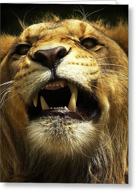 Lions Photographs Greeting Cards - Fierce Greeting Card by Wade Aiken