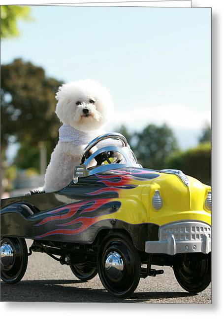 Family Member Greeting Cards - Fifi goes for a car ride Greeting Card by Michael Ledray