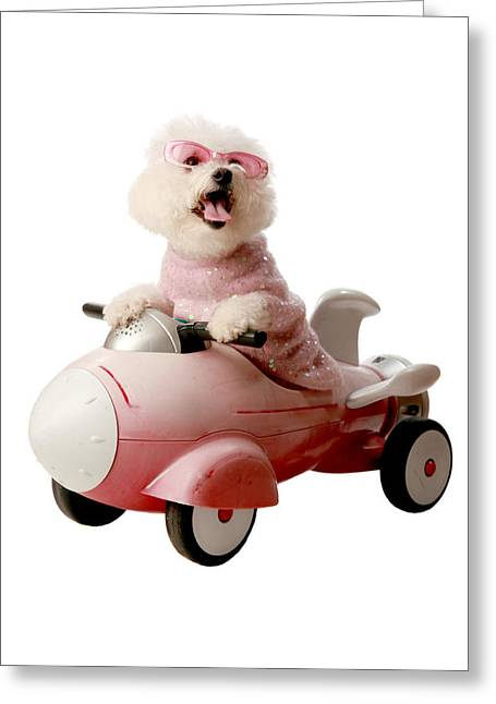 Family Member Greeting Cards - Fifi is ready for take off  Greeting Card by Michael Ledray