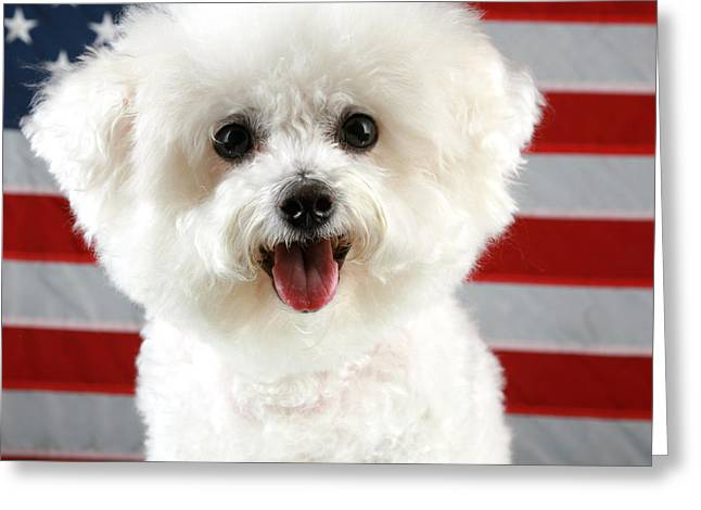 Fifi The Bichon Frise Greeting Cards - Fifi Loves America Greeting Card by Michael Ledray