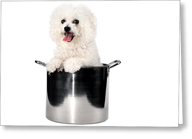 Fifi The Bichon Frise Greeting Cards - Fifi loves to cook Greeting Card by Michael Ledray