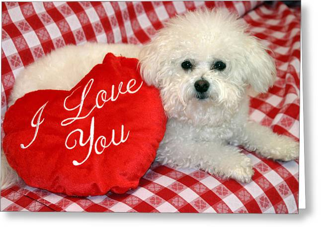 Fifi The Bichon Frise Greeting Cards - Fifi loves you Greeting Card by Michael Ledray