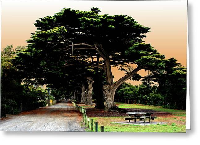 """fig Trees"" Greeting Cards - Fig Tree Lane Greeting Card by Douglas Barnard"