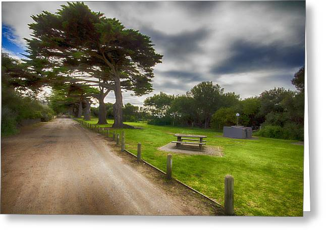 """fig Trees"" Greeting Cards - Fig Tree Lane V2 Greeting Card by Douglas Barnard"