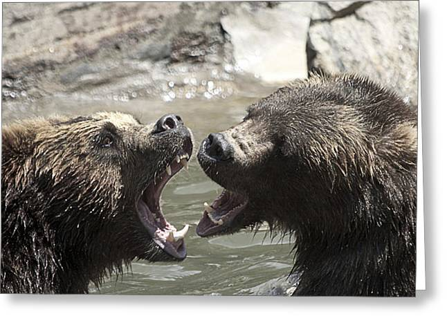 Yosi Cupano Greeting Cards - fight Bears Greeting Card by Yosi Cupano