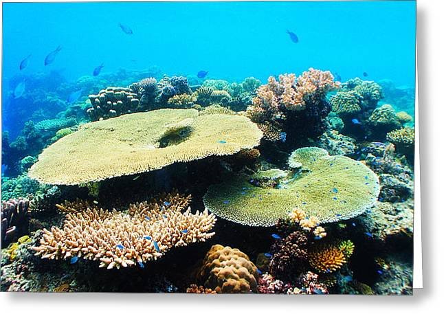 Brian Governale Greeting Cards - Fijian Aquarium Greeting Card by Brian Governale