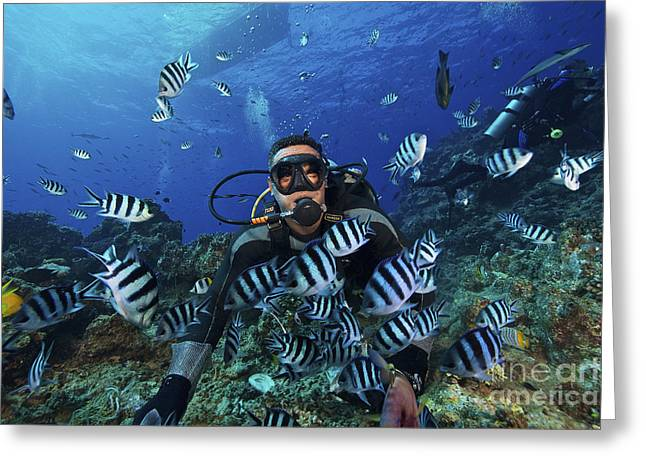 Undersea Photography Greeting Cards - Fijian Dive Guide Feeds A School Greeting Card by Terry Moore