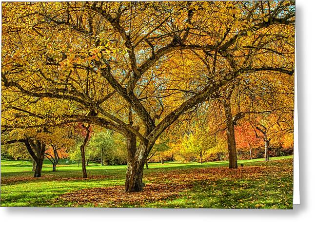 Spokane Greeting Cards - Finch Arboretum Autumn Greeting Card by Michael Gass