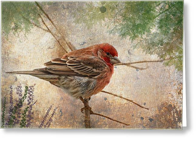 Finch Art Or Greeting Card Blank Greeting Card by Debbie Portwood