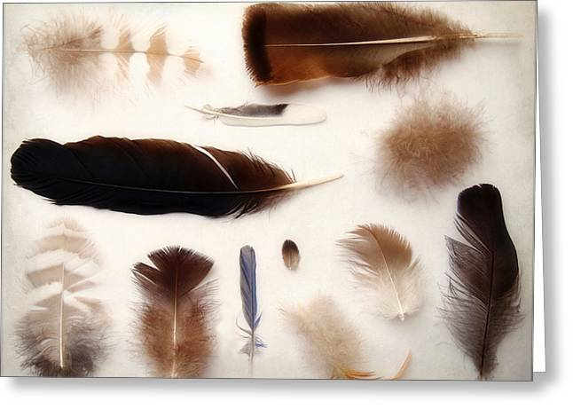 Chickadee Greeting Cards - Finding Feathers Greeting Card by Angie Rea