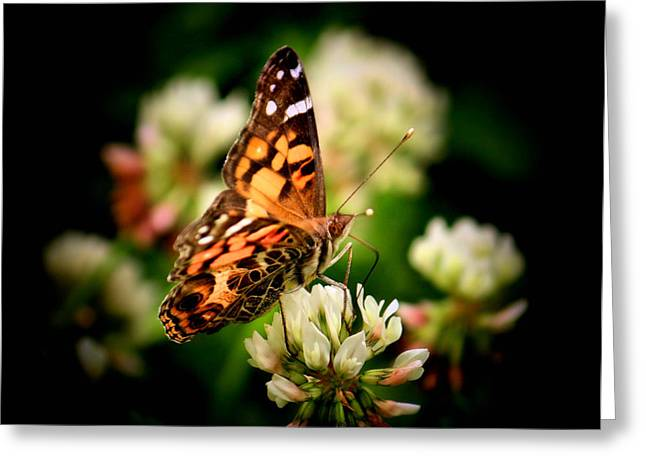 Painted Lady Butterflies Greeting Cards - Fine Dining Greeting Card by Karen M Scovill