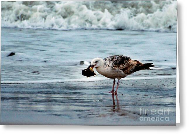 Seagull On Beach Greeting Cards - Fine Ocean Dining Greeting Card by Paul Ward