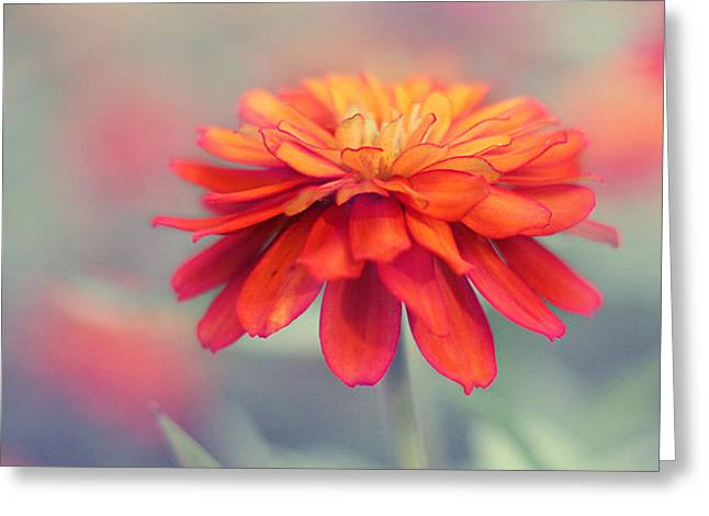 Macro Floral Photos Greeting Cards - Fire and Ice Greeting Card by Amy Tyler