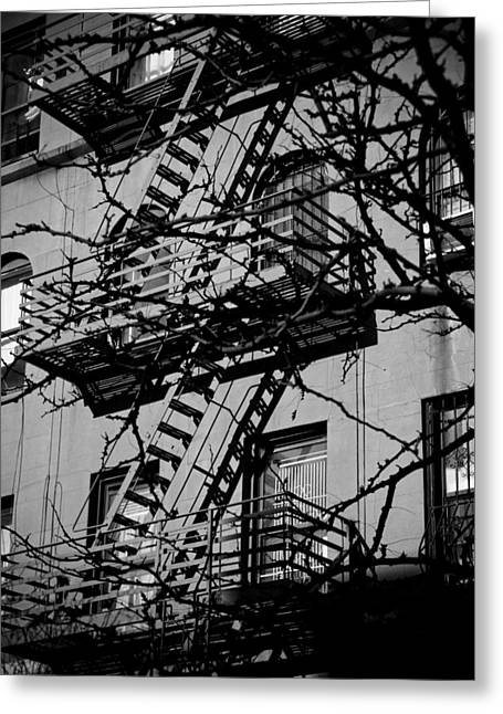 Yellow Dog And Truck Greeting Cards - Fire Escape Tree Greeting Card by Darren Martin