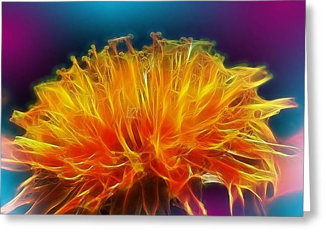 Fire Woven Dandelion Greeting Card by Bill Tiepelman