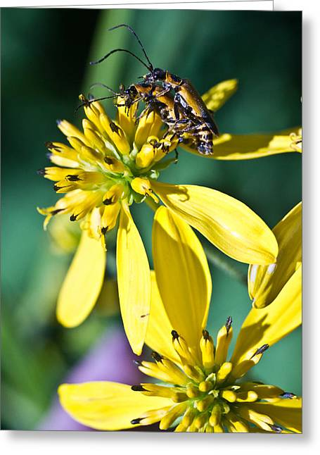 Sexual Relation Greeting Cards - Firefly Fornication 2 Greeting Card by Douglas Barnett