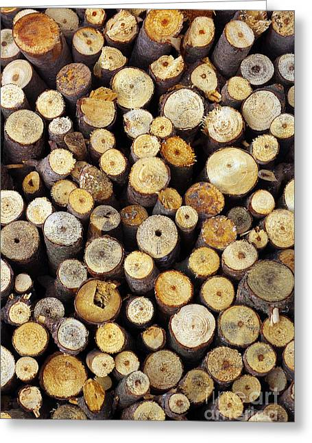 Firewood Greeting Card by Carlos Caetano