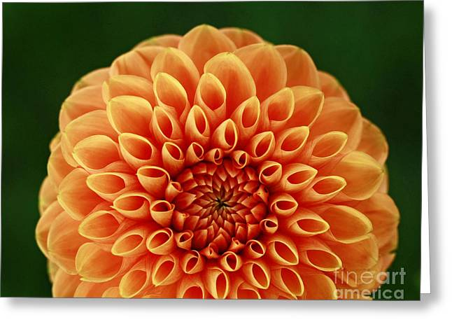 Shelley Myke Greeting Cards - First Impression Greeting Card by Inspired Nature Photography By Shelley Myke