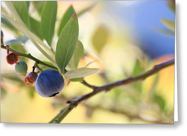 Abstract Blueberries Greeting Cards - First Pick Greeting Card by Heidi Smith