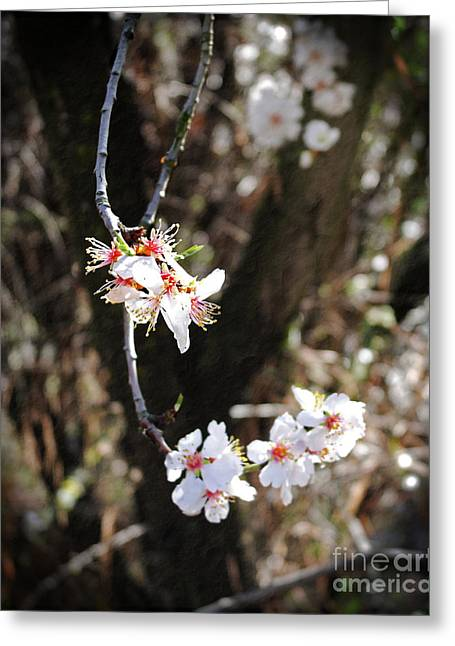 Altered Greeting Cards - First Sakura Branch Greeting Card by Laura Iverson